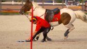 Les Pony Games, l'autre manière de monter un poney
