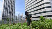 Jeunes pousses sur gratte-ciel : l'agriculture sur les toits de Singapour décolle
