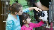 Chats adultes, noirs ou différents : les laissés pour compte des refuges pour animaux