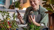 PictureThis: l'application pour connaître tout sur les plantes vertes en une photo