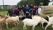 Les dix représentants des refuges se sont réunis ce mardi matin pour dénoncer le sort réservé aux animaux