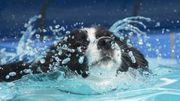 Nouveau: une piscine pour chiens à Charleroi!