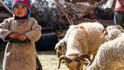 A l'image des vêtements du petit Stenzin, les habitants du Zanskar vivent encore de manière très traditionnelle grâce à l'agriculture et l'élevage.