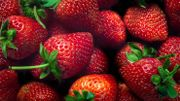 La fraise de Wépion va coûter plus cher