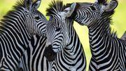 Plus de 30 000 animaux sauvages saisis lors d'une gigantesque opération contre le braconnage