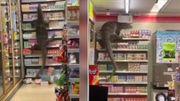 Un lézard géant affamé dévalise un magasin en Thaïlande