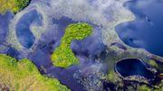 Le premier arbre de mer flottant va voir le jour en Chine