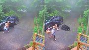 Image insolite : une femme découvre un ours à l'intérieur de sa voiture