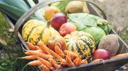 Les fruits et légumes de saison en octobre