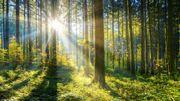 Arbres, fuites de gaz, aspirer le carbone: trois idées oubliées pour sauver le climat