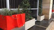Des urinoirs pour faire pousser les plantes urbaines