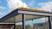 Aux Pays-Bas, Utrecht préserve ses abeilles avec des abribus fleuris