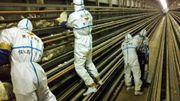 Japon: la grippe aviaire s'étend, 1,6 million de volailles abattues