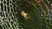 A New York, une exposition pour ne plus avoir peur des araignées