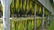 Cap sur Vresse-sur-Semois: balades en forêt et au fil de l'eau