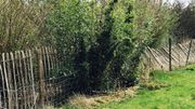Les bambous qui embêtent le fermier