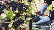 Bordeaux : vendanges atypiques et rendements moindres