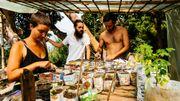 Loin des multinationales et de la mondialisation, Mundo Nuevo et ses volontaires cultivent leurs semences et leurs produits sur le modèle de la permaculture.