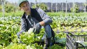 Alimentation: Trouvez des producteurs locaux près de chez vous