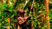 Un travailleur sous-traitant dans la plantation de Dibombari