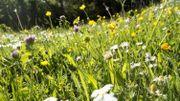 Des produits cosmétiques à base de mauvaises herbes