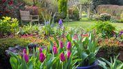 Testez la nature de votre sol pour optimiser votre jardin