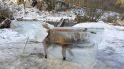 Un renard transformé en bloc de glace