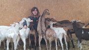 La chèvrerie fromagerie le CabriOlait