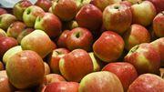 Certaines pommes seraient plus allergisantes que d'autres...