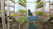Skygreens, une culture maraîchère en hauteur pour réduire l'espace au sol