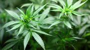 Comment parler du cannabis à nos jeunes ?