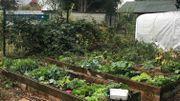 Echanger les graines de son potager: bon pour le porte-feuille et la biodiversité