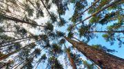 Comme nous, les arbres souffrent de la pollution sonore!