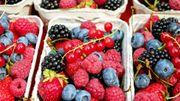 Les Saveurs de chez nous : Une diversité de fruits de chez nous à découvrir à la Cense aux Merles à Braives et des légumes de saison chez Légumes Band à Voroux.