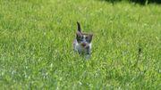 Un chat erre près de chez vous ?