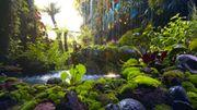 Il y a 23millions d'années, la Terre était plus chaude et les plantes absorbaient beaucoup plus de CO2