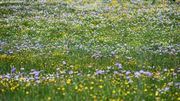 Optez pour une pelouse écologique !