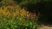 Les floraisons sont nombreuses à toutes les saisons