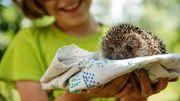 Oiseaux, grands ou petits mammifères, les bons gestes pour les sauver!