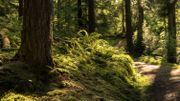 Les bains de forêt pour améliorer sa santé