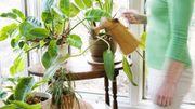 Prendre soin de ses plantes d'intérieur en été