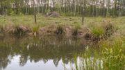 L'importance des réserves naturelles en cas d'inondation !