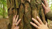 «Tenneville-les-Bains… de forêt!»: le retour aux sources