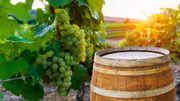 Coronavirus : du prosecco au chianti, le vin italien boit la tasse
