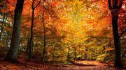 Voyage musical et saisonnier aux couleurs orangées de l'automne