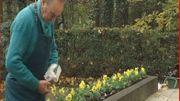 Plantation des bulbes au jardin