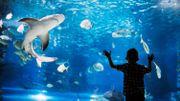 Idée d'activité pour la famille : le plus grand aquarium d'Europe à 1h de la frontière belge