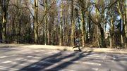 Sur la route qui ceinture le parc, les tracés au sol sont presque effacés, passages pour piétons compris