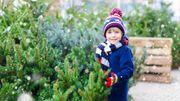 Les conseils pour choisir le bon sapin de Noël
