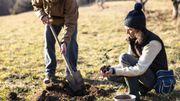 Savez-vous pourquoi est-il important de planter des arbres ?